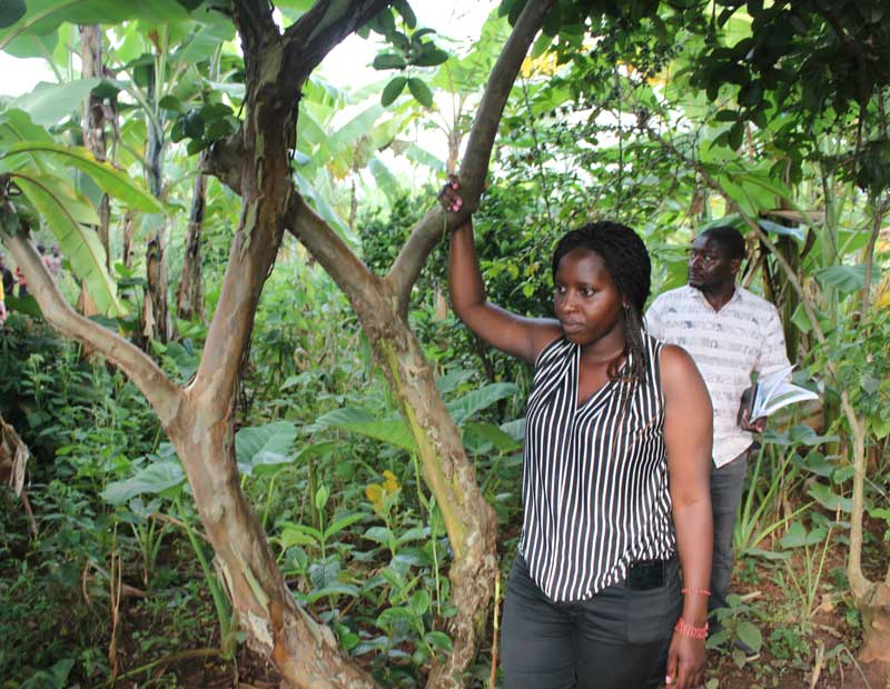 Picture of a forest garden in Rwanda with local permaculture expert Rose Nibagwire and Theodore, a teacher from DR Congo