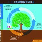 carbon_cyc