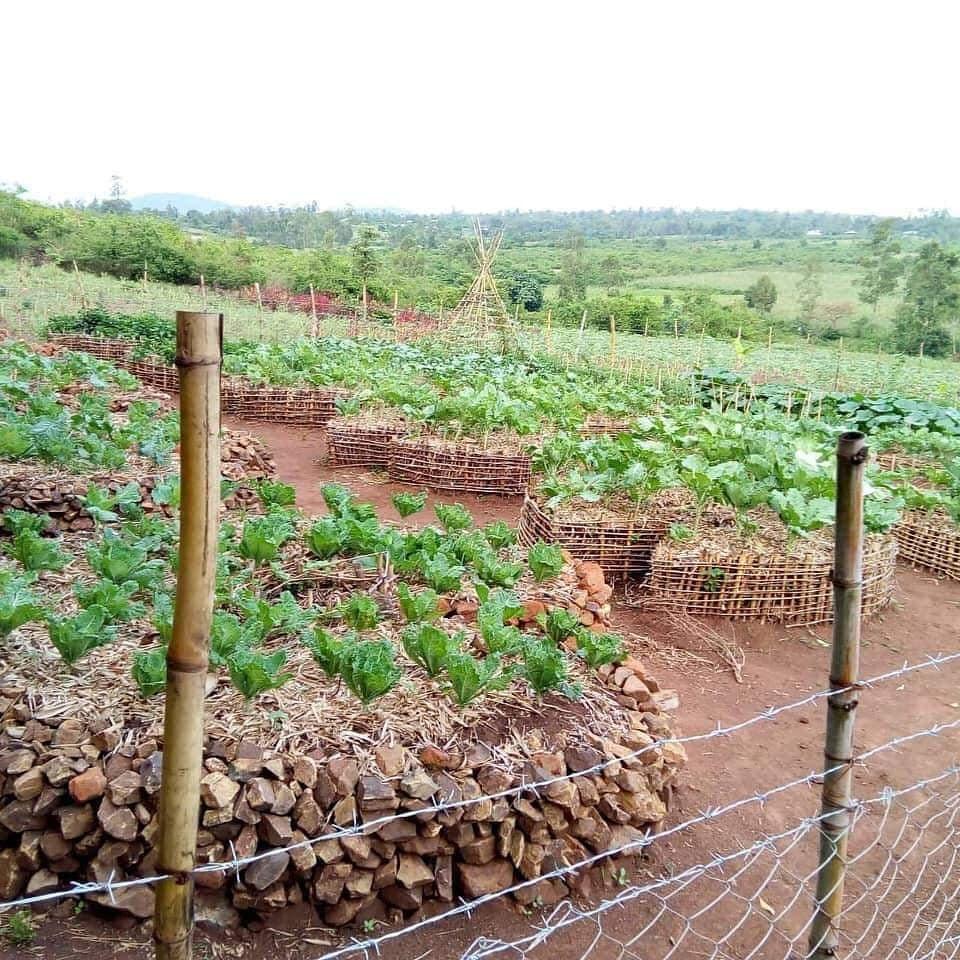 permaculture field, Kenya