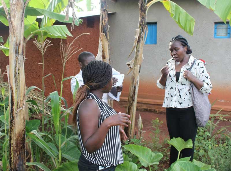 permaculture, rose nibagmire, sector39,