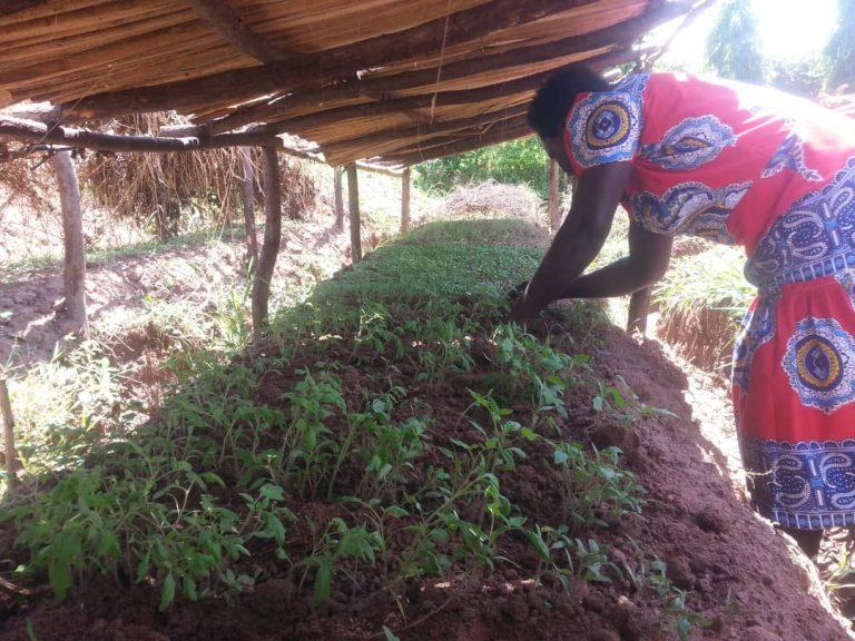 seedling bed