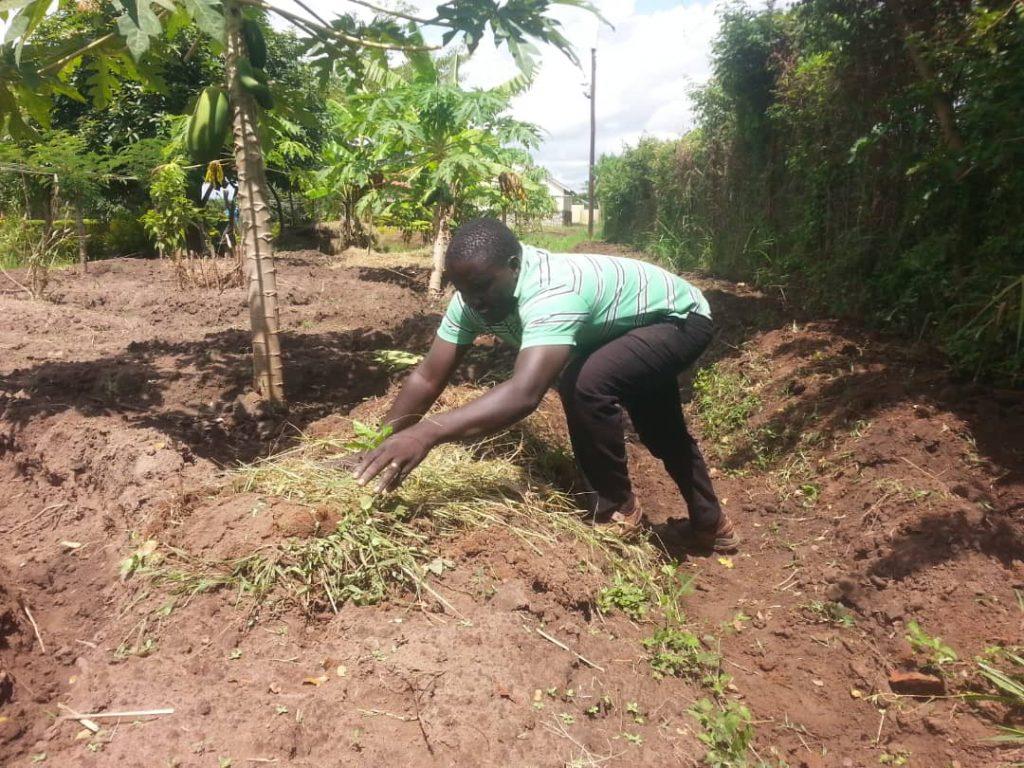 Godfrey planting