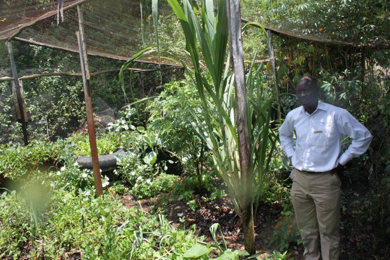 Permaculture garden, with its gardener