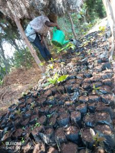 Tending the tree nursary at Save