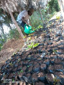 Growing the trees on site that will stabalise the landsacpe