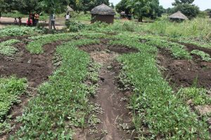 s39 permaculture & refugees
