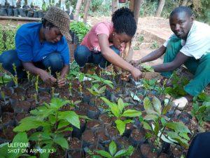 save school rwanda permaculture