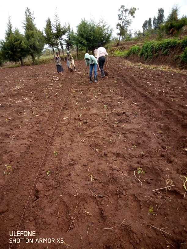 S39 permaculture in Rwanda