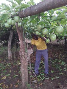 Sector39 permaculture in Uganda