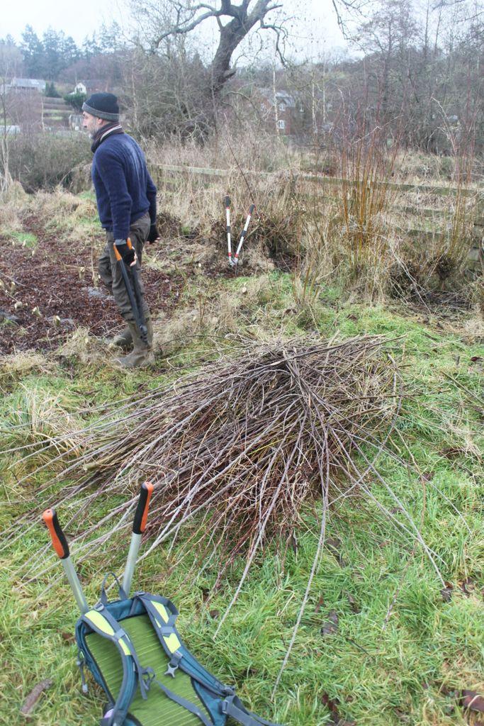 Shorter, narrower basket willows