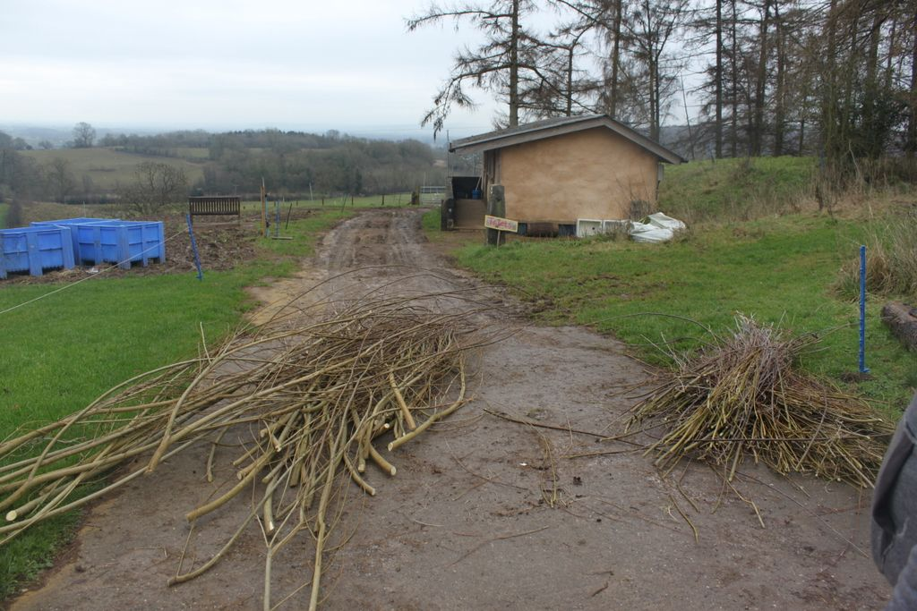 Processing willow for planting at Treflach
