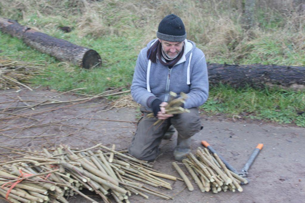 Propagating willow, Treflach