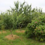 Cae Bodfach community orchard