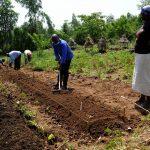 teaching work in field